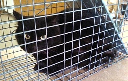 black-cat3