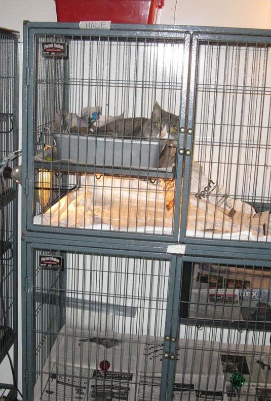 quarantined adult cat